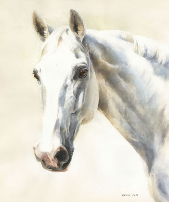 Pferdeportrait Schimmel