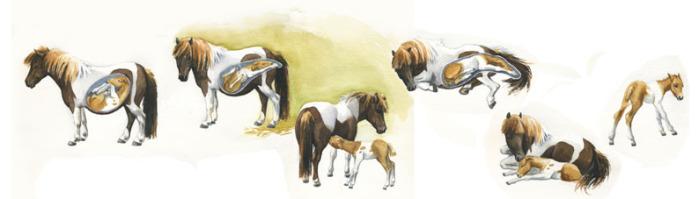 Pferdezeichnung Illustration Fohlengeburt
