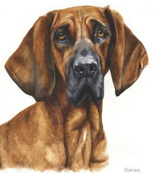 Hundeportraits, welche die Einzigartigkeit und Schönheit Ihres Hundes in einem Kunstwerk verewigen