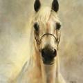 Pferdegemälde Araber