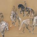Studien Dressur Pferde
