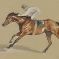 Pferde zeichnung Rennsport