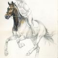 Pferd gezeichnet Bleistift