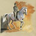 Pferde Zeichnung Dressur Berthier