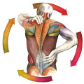 Illustration Anatomie Medizin