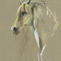 Pferdeportrait gezeichnet