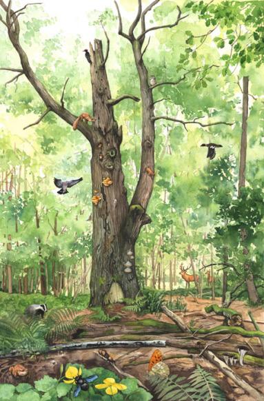 Naturillustration, Wimmelbild Wald Totholz