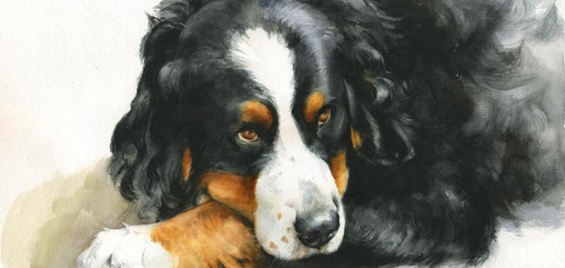 Hundeportrait malen lassen